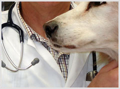 Alphabet Veterinarian Mobile Apps